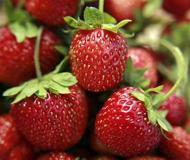 Nie wyrzucaj liści i szypułek truskawek. Zjedz na zdrowie!