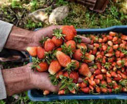 Wielkie oszustwo sprzedawców truskawek. Zobacz, jak się uchronić