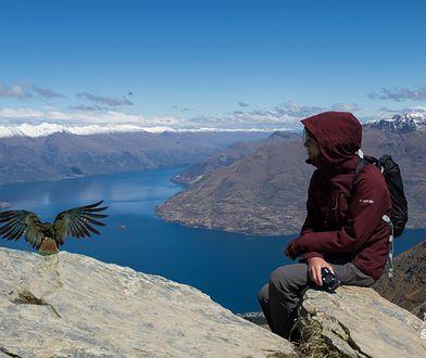 Nowa Zelandia. Niecodzienne spotkanie z naturą