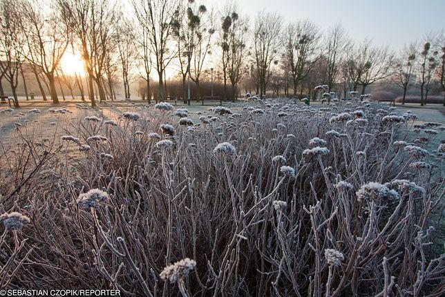 Mimo słonecznej aury będzie chłodno. Lokalnie może spaść śnieg