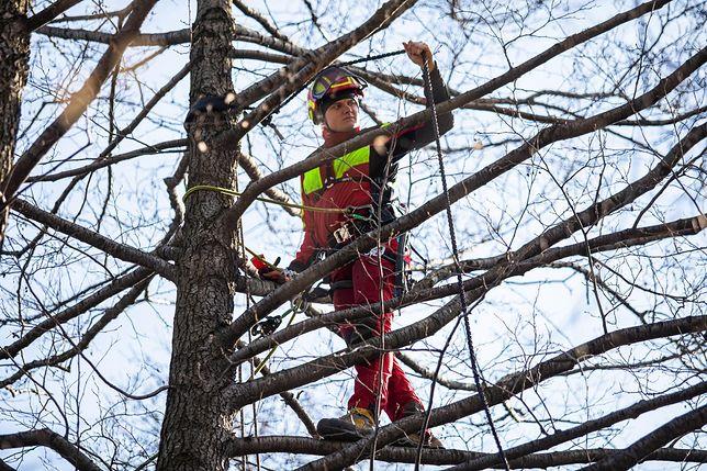 Bielsko-Biała. Pracownicy instalują specjalne liny, które wiewiórkom posłużą do przejścia na drugą stronę drogi.
