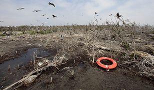 Rok po ekologicznej katastrofie