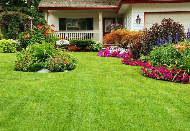 Jak zaprojektować ogród? Wskazówki są prostsze niż myślisz