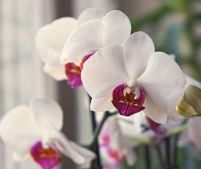 Kwiaty doniczkowe w sklepach