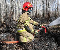 Pożar w Biebrzańskim Parku Narodowym. Kończy się akcja gaśnicza strażaków