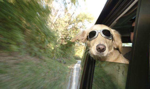 Jak bezpiecznie podróżować z psem?