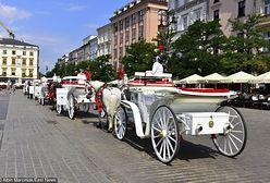 Krakowskie konie bez szans na odrobinę cienia. Bezduszne przepisy dotyczące zwierząt
