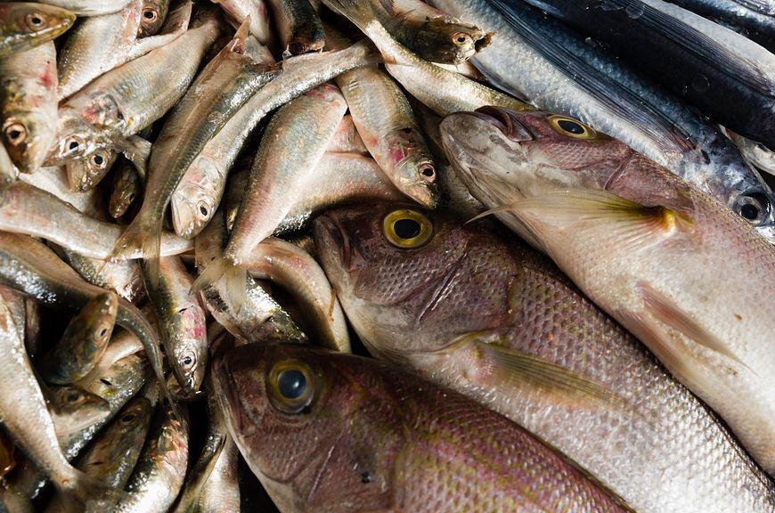 Szkodliwe ryby dla zdrowia