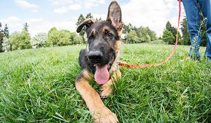 Policja szuka psów. Płacą nawet 6 tys. złotych