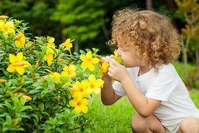 Trujące rośliny w naszych ogrodach. Trzeba uważać zwłaszcza na dzieci