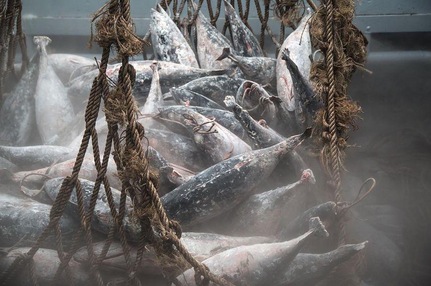 Sztuczne hodowle ryb