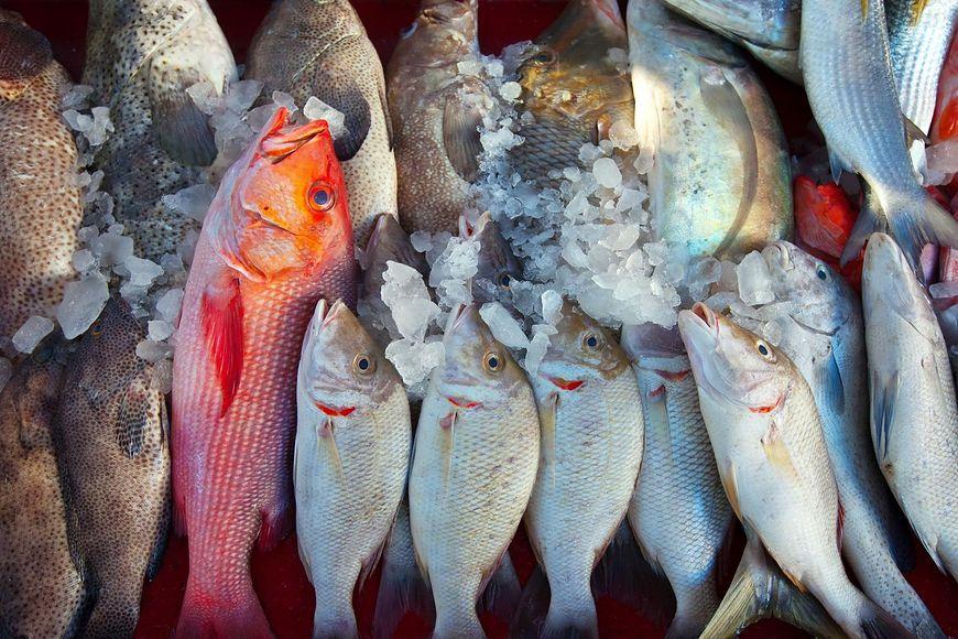 Toksyny w rybach