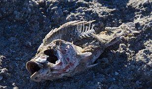 Pierwsze zwierzęta spowodowały globalne ocieplenie