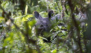 Polski oddział WWF publikuje oświadczenie. W tle eko-bojówki