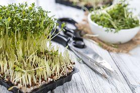Rzeżucha - właściwości, uprawa, zastosowanie