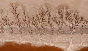 Pustynia Mojave - wyjątkowe obrazy stworzone przez naturę