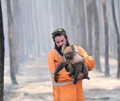 Australia płonie. Znany naukowiec: Zginął ponad miliard zwierząt