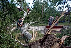 Gdańsk i Sopot pomogą poszkodowanym w nawałnicach. Przekażą ponad milion złotych