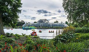 Kew Gardens w Londynie ma największą kolekcję roślin na świecie. Ponad 30 tys. różnych gatunków kwiatów, drzew i krzewów reprezentuje przeszło 7 mln okazów roślin