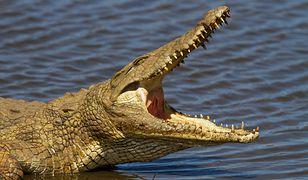 Lekarz pozbywał się zwłok rzucając je krokodylom na pożarcie