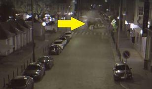 Kupy słonia na ulicach Poznania i to nagranie. Miasto tłumaczy