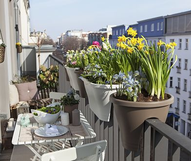 Mały balkon można zagospodarować kwiatami