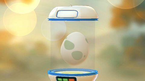 6. Inkubacja zdobytych jajek