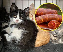 Filety i szynka z kota. Kocia masarnia reklamuje się w internecie