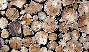 Jako łapówkę chciał dać drewno