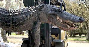 Seryjny morderca. Otworzyli aligatora, rozwiązali zagadkę sprzed 24 lat