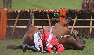 Krwawy finał wyścigów w Cheltenham. 5 koni nie żyje
