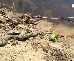 Drastyczne sceny na terenie Nadleśnictwa Grodziec. Leśnicy pokazali nagranie