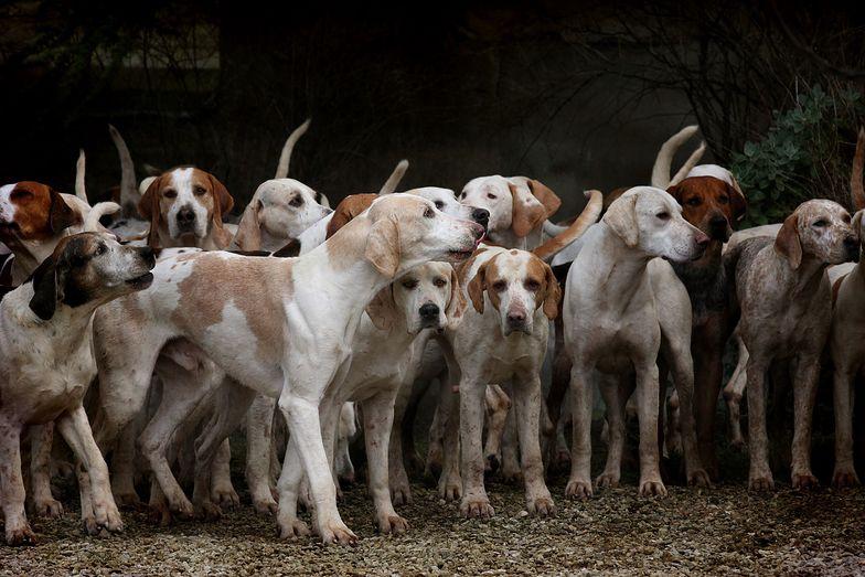 200 psów uratowanych z rzeźni w Chinach. Wkrótce zaczną nowe życie