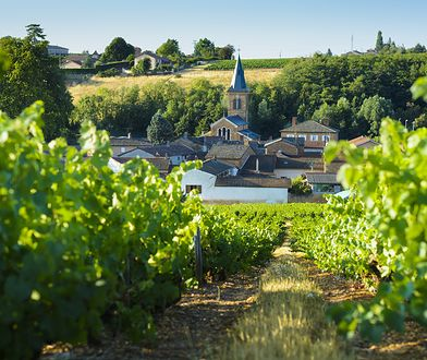 Święto wina czas zacząć! Beaujolais Nouveau i najbardziej szalone tradycje winiarskie na świecie