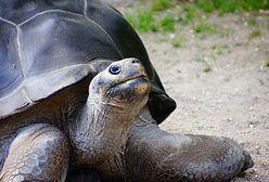 Żółw upolował ptaka. To pierwsze takie nagranie [WIDEO]