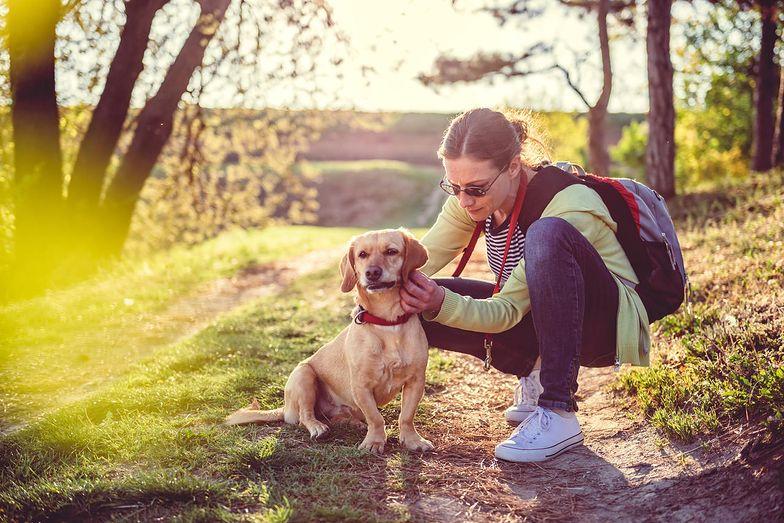 Zbliża się wiosna - kiedy zacząć stosować preparaty przeciwko kleszczom dla psa?