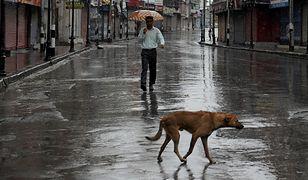 Pakistan: władze Karaczi zleciły otrucie tysięcy bezpańskich psów