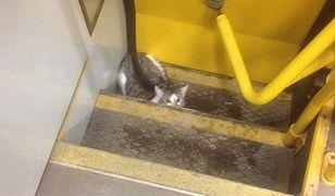 Kotka w tramwaju linii 26