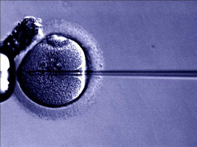 Rząd zajmie się wkrótce projektem ustawy o in vitro