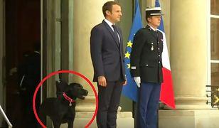 Emmanuel Macron z psem