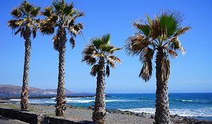 Wybrzeże Costa Adeje na Teneryfie i plaża Playa de las Americas