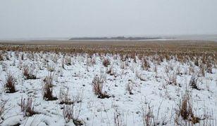 To nie tylko obraz kanadyjskiego pola. Na fotografii ukryte są zwięrzęta