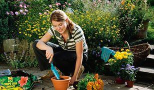 Wiosna w ogrodzie: rozmnażanie roślin, ściółkowanie