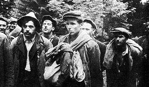 Ofiary UPA odnalezione w okolicach Przemyśla. IPN ustala, kim było 14 zamordowanych osób