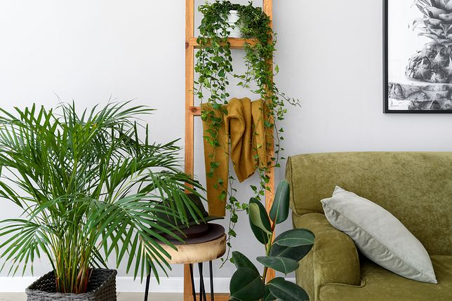 12 gatunków roślin, które nie potrzebują światła. Idealne do ciemnego mieszkania