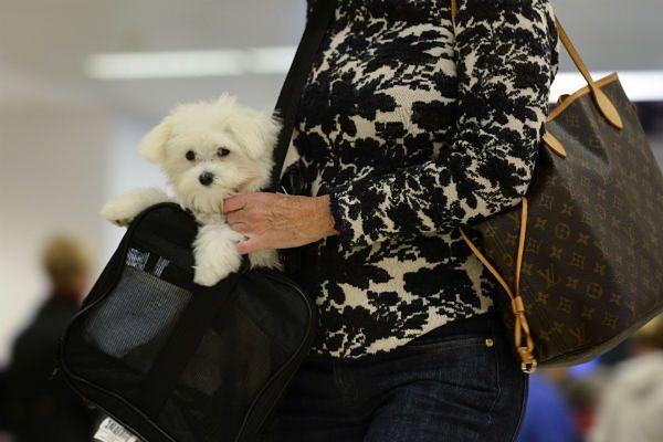 Na lotnisku JFK powstanie luksusowy terminal dla zwierząt