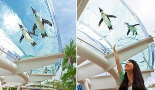 Oceanarium z latającymi pingwinami