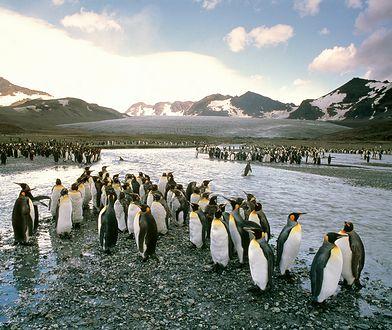 Wyspa Pebble wystawiona na sprzedaż