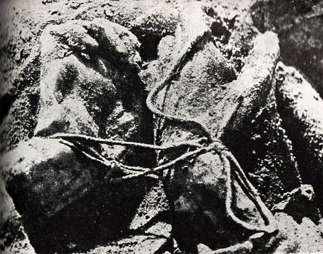 Fotografia z 1943 r. z ekshumacji ciał Polaków zamordowanych w Katyniu w 1940 r.