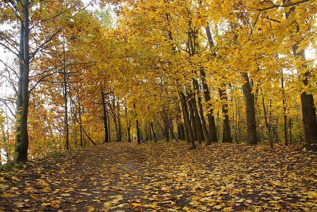 Barwy warszawskiej jesieni. Kolejne zdjęcia czytelników!